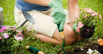 Woman planting small plants